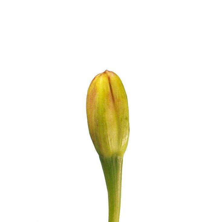 Flower 2 of 8 center