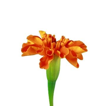Flower 6 of 8 centre