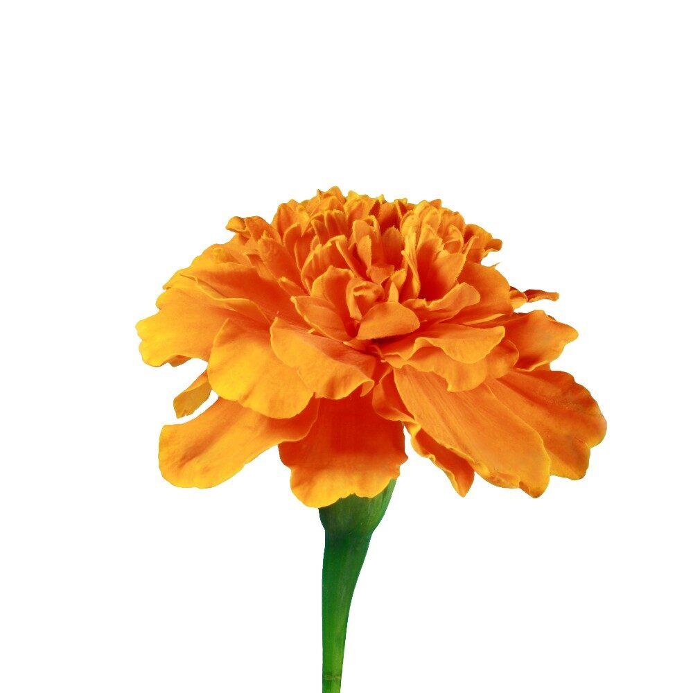 Flower 7 of 8 centre