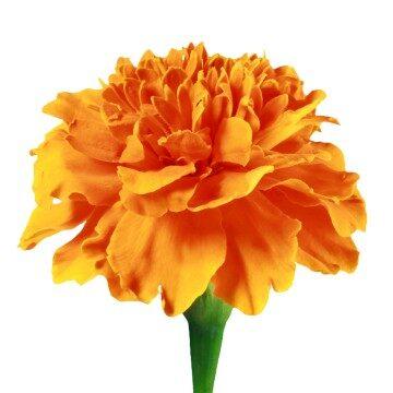 Flower 8 of 8 centre